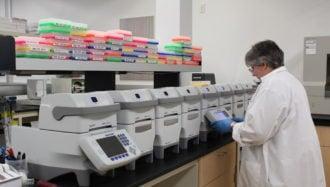 Diversité et biogéographie des algues