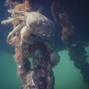 Détection précoce d'envahisseurs marins