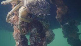 La détection précoce d'envahisseurs marins