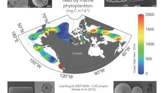 Production et diversité du phytoplancton marin