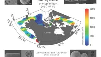 Marine Phytoplankton Production and Diversity
